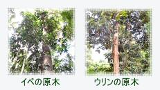 大事な森林資源