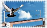 鳩の飛来を防止するテグス