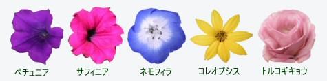 雨に弱い植物